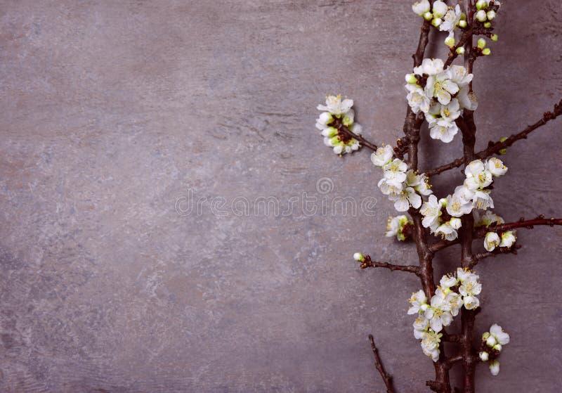 春天花卉喜怒无常的背景 免版税图库摄影