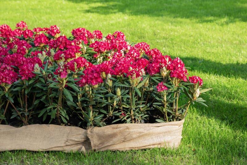 春天花在一个装饰罐在花床上 图库摄影