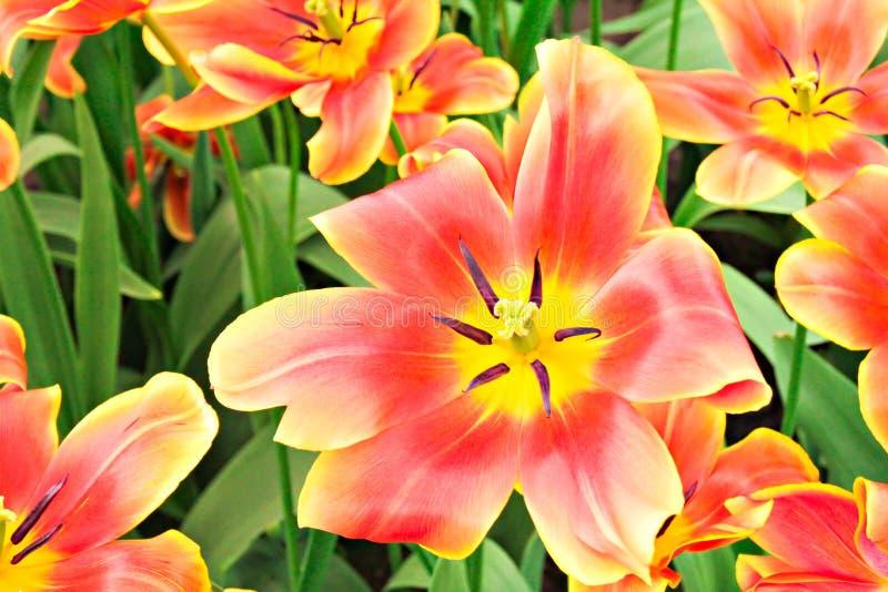 春天花在庭院里 免版税库存照片