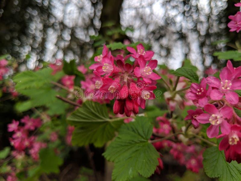 春天花在英国 免版税库存图片
