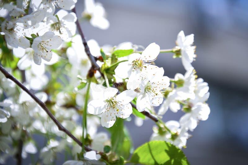 春天花在阳光下 免版税库存图片