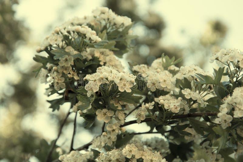 春天花开花的树背景,夏时 库存照片
