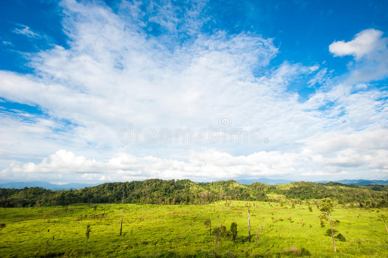 春天草和森林的领域 库存照片