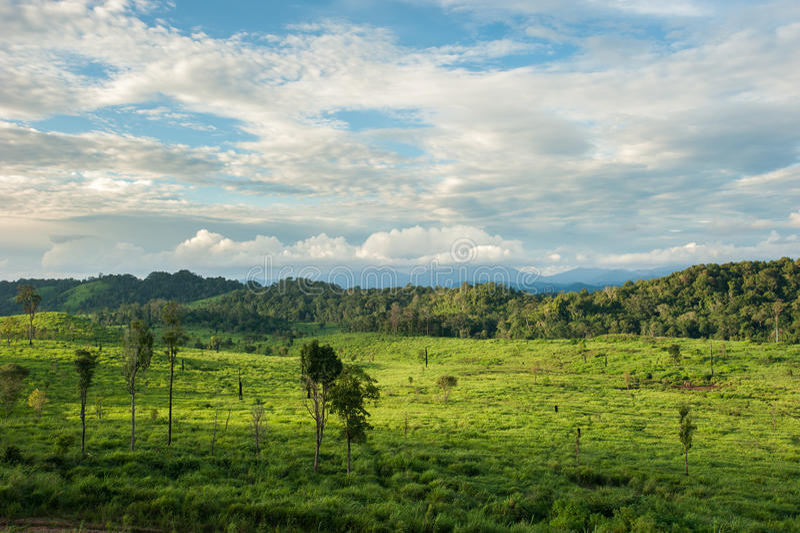 春天草和森林的领域 免版税库存图片