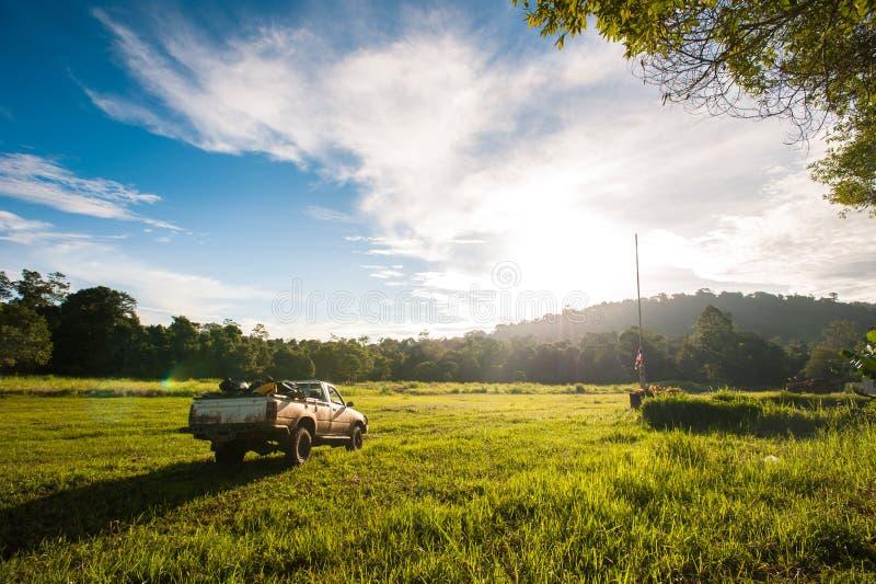 春天草和森林的领域 免版税库存照片