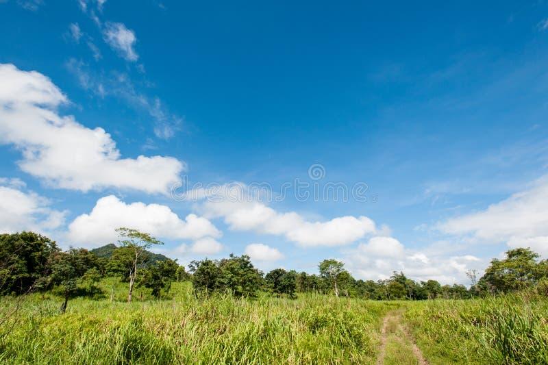春天草和森林的领域 库存图片
