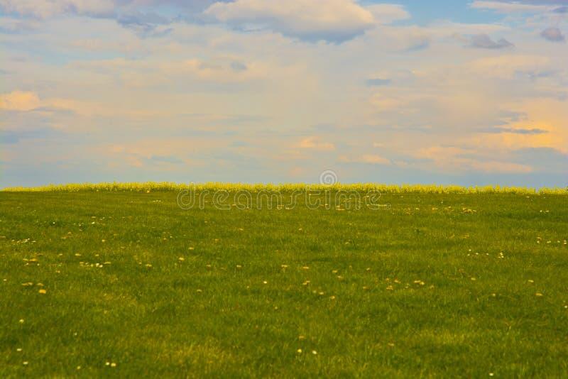 春天草甸黄色强奸和太阳集合天空 免版税库存图片