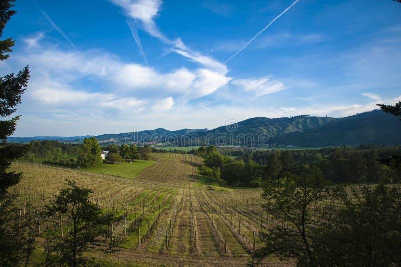 春天葡萄园, Willamette谷,俄勒冈 免版税图库摄影