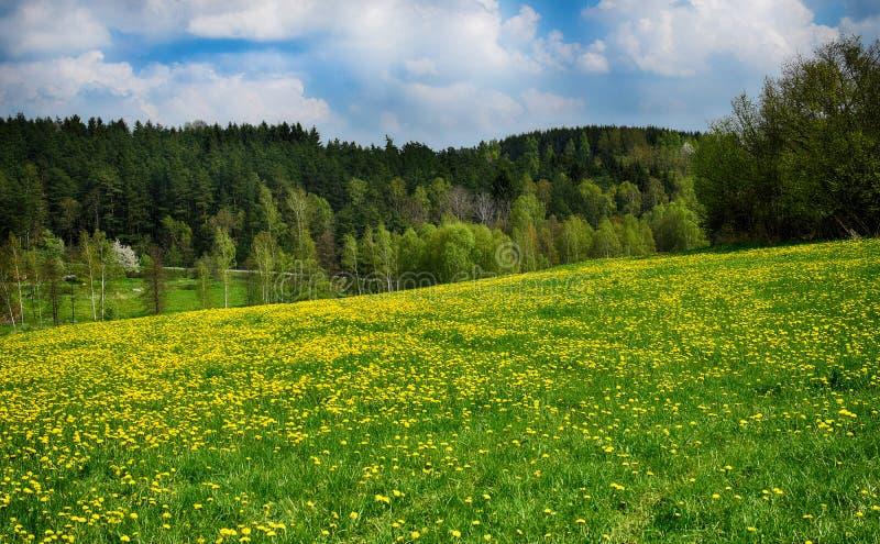 春天蒲公英花在草甸 美好的风景 库存照片