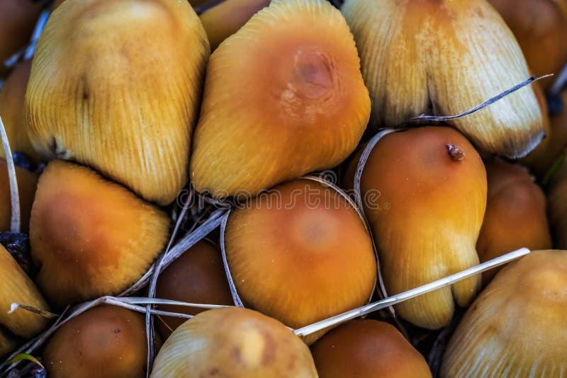 春天蘑菇的特写镜头摄影 库存图片