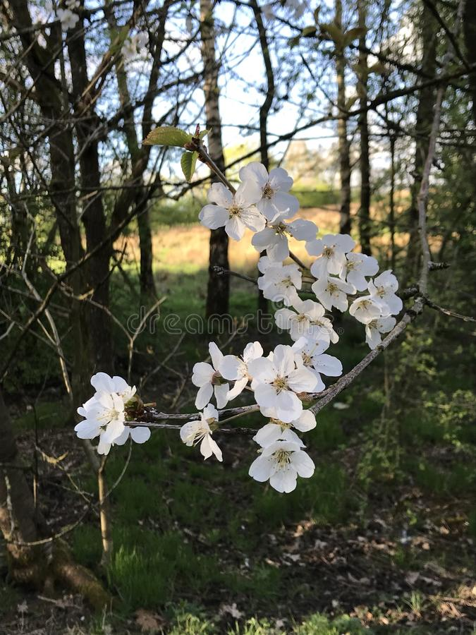 春天进展 库存照片