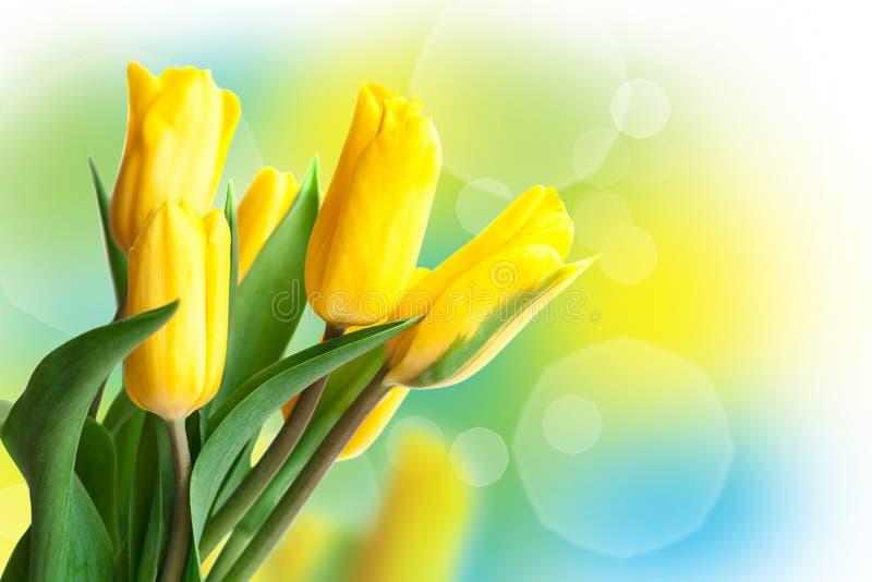 春天郁金香和阳光 8次行军假日卡片 图库摄影