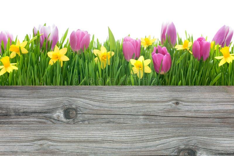 春天郁金香和黄水仙花 免版税库存图片