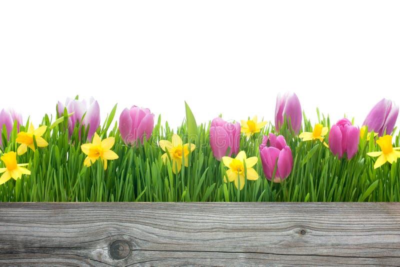 春天郁金香和黄水仙 免版税图库摄影