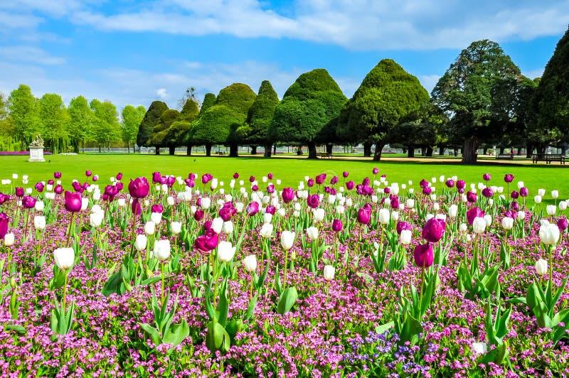 春天郁金香在汉普顿法院庭院,伦敦,英国里 库存图片