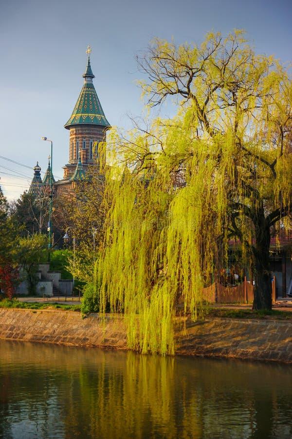 春天都市风景与Bega河河岸和与大城市大教堂在背景中在蒂米什瓦拉 库存照片