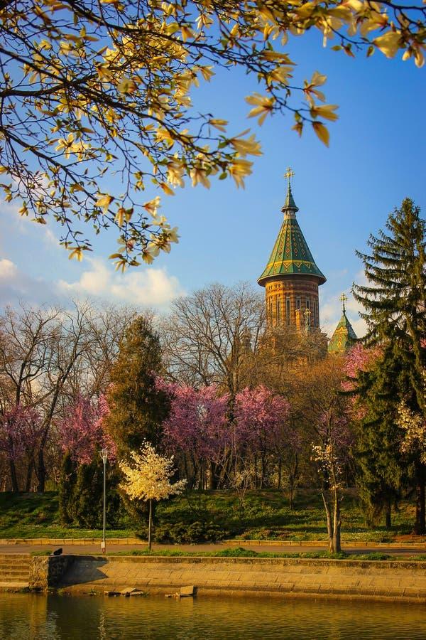 春天都市风景与Bega河河岸和与大城市大教堂在背景中在蒂米什瓦拉 免版税图库摄影