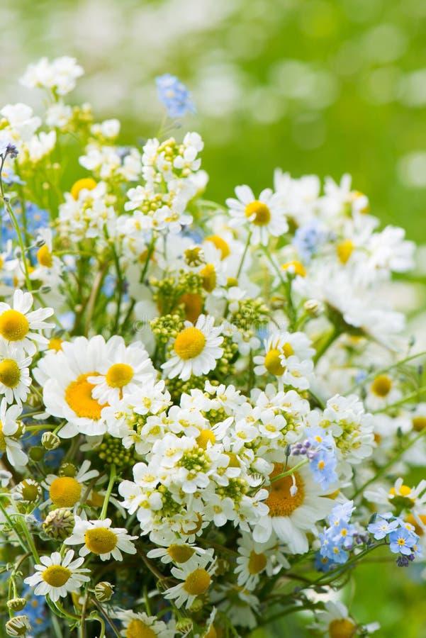 春天野花花束 库存图片