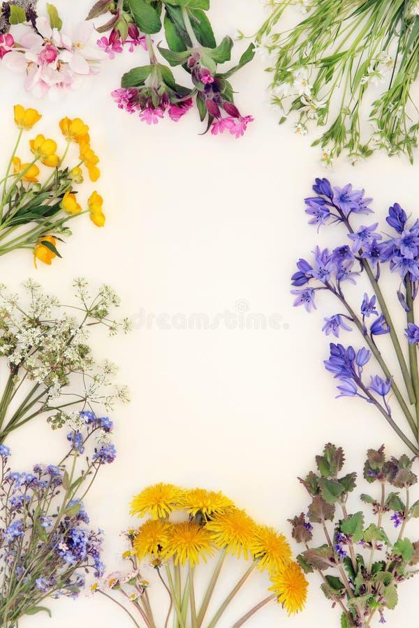 春天野花边界 库存图片
