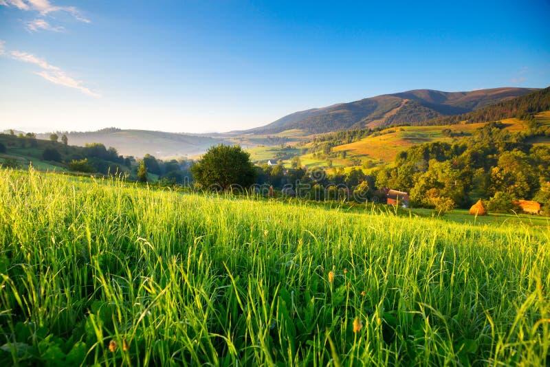 春天阿尔卑斯环境美化 春天阿尔卑斯环境美化与青山 与早晨露水的新鲜的绿草在阳光下 免版税库存照片