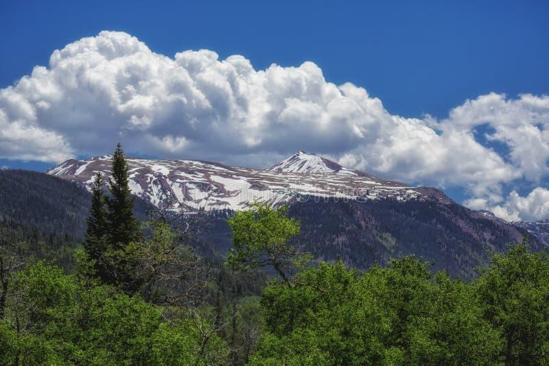 春天雪和绿色白杨木 免版税图库摄影