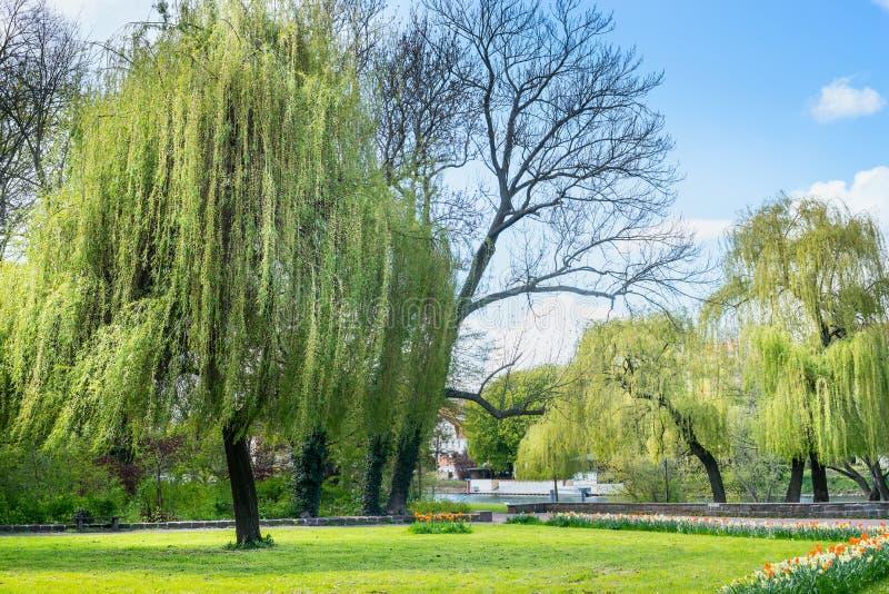 春天风景城市公园,在堤防的树河,绿草,蓝天 图库摄影