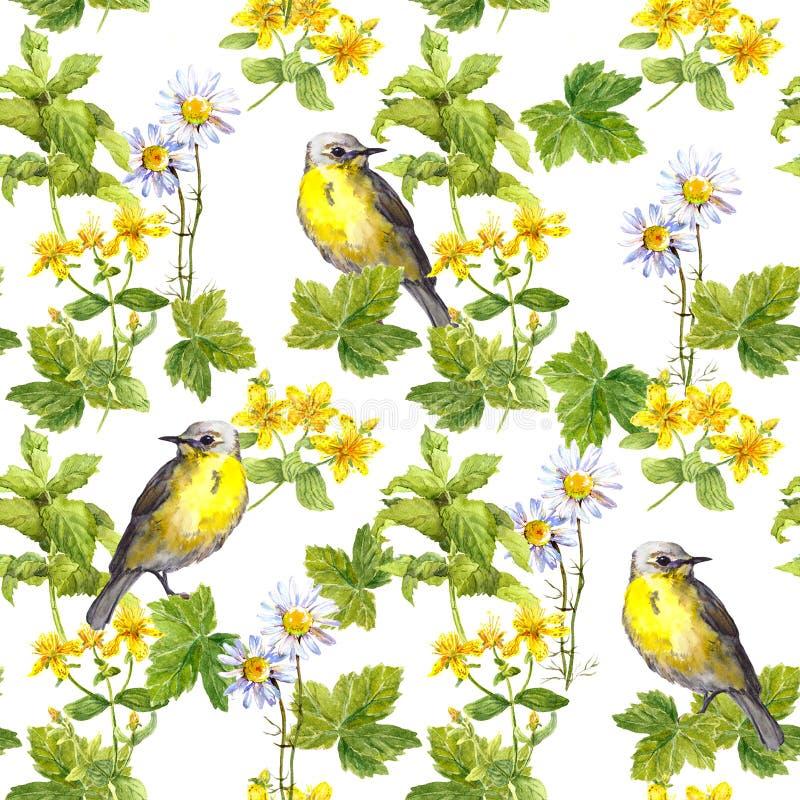 春天鸟,草甸开花,狂放的草本 无缝的模式 水彩 免版税库存照片