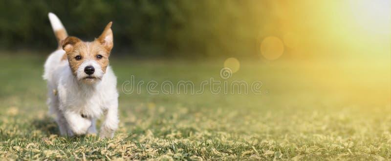 春天,夏天概念-逗人喜爱的愉快的爱犬小狗使用在草的,网横幅 库存图片