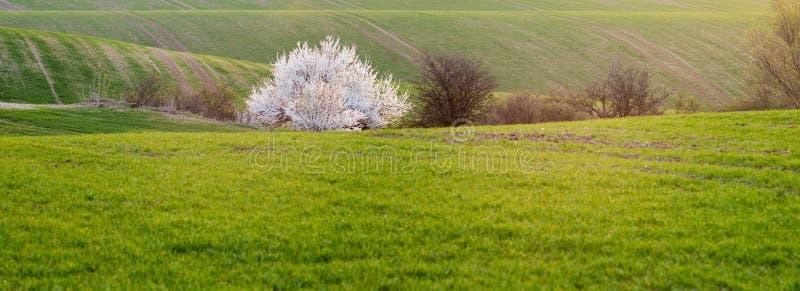 春天,绿色领域全景  免版税库存图片