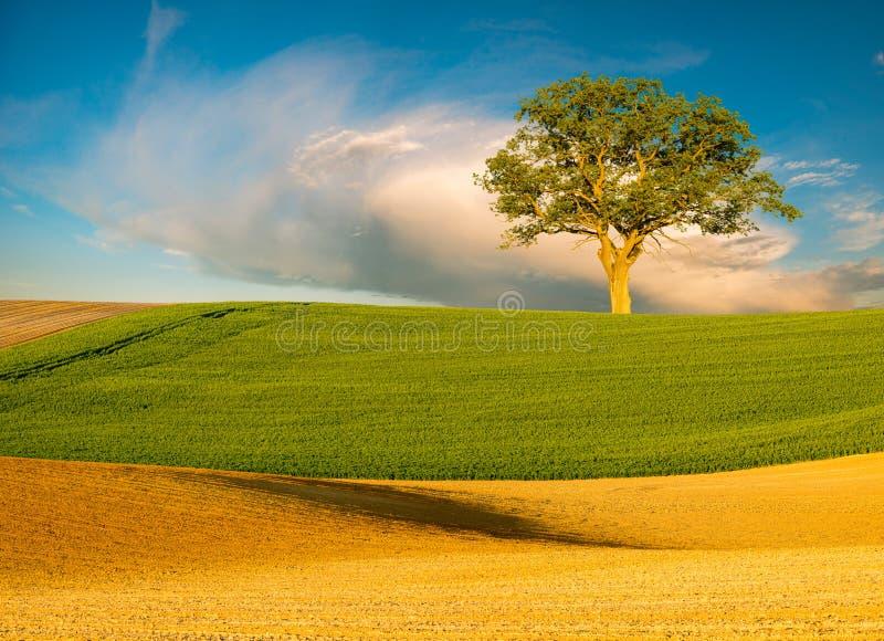 春天,绿色领域全景  库存图片