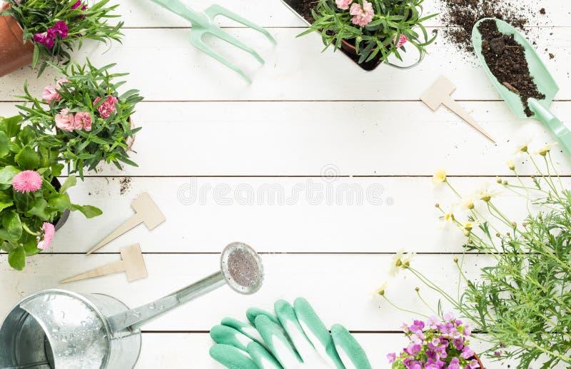 春天-园艺工具和花在罐在白色木头 免版税图库摄影