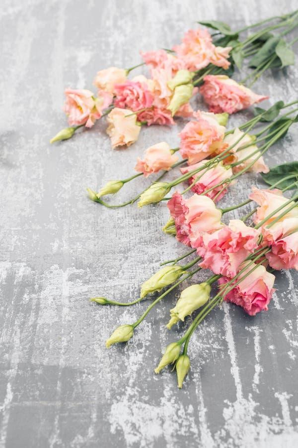 春天 在具体背景的新鲜的桃红色南北美洲香草花 与空间的平的位置样式文本的 妇女或母亲节 免版税库存照片