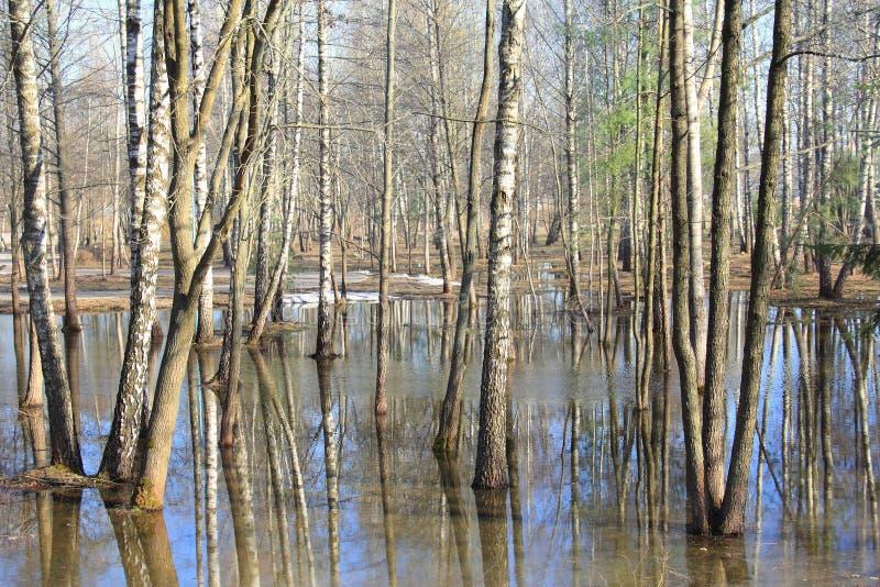 春天洪水在森林里 库存图片