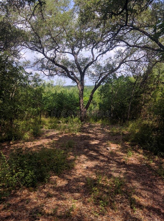 春天-在灌木的绽放 库存图片