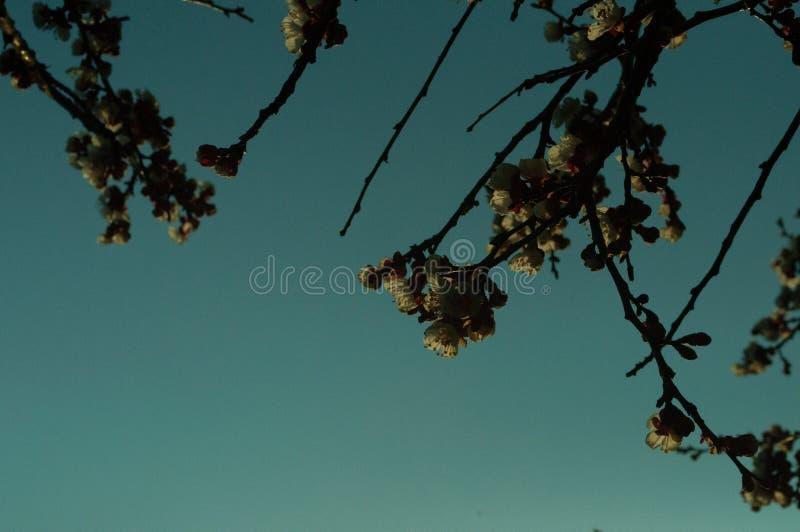 春天 并且花的时期在树的 免版税库存照片