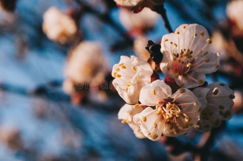 春天 并且花的时期在树的 库存图片