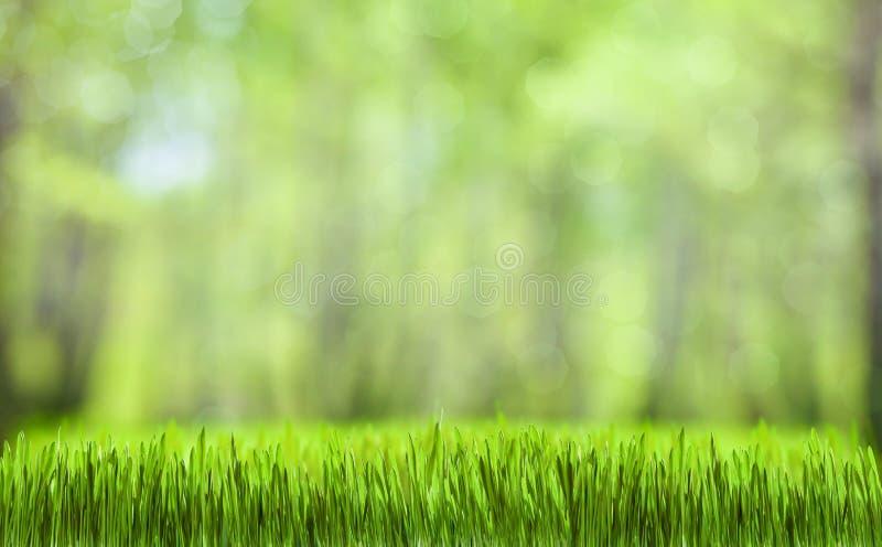 绿草摘要自然背景 库存照片