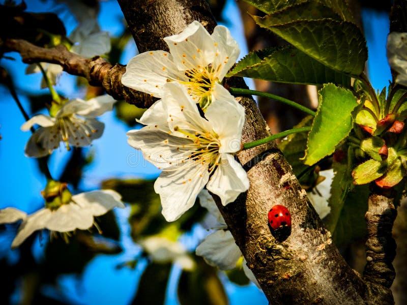 春天-花和树 免版税库存图片