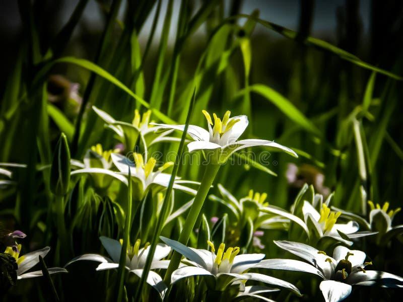 春天-花和草 免版税库存照片