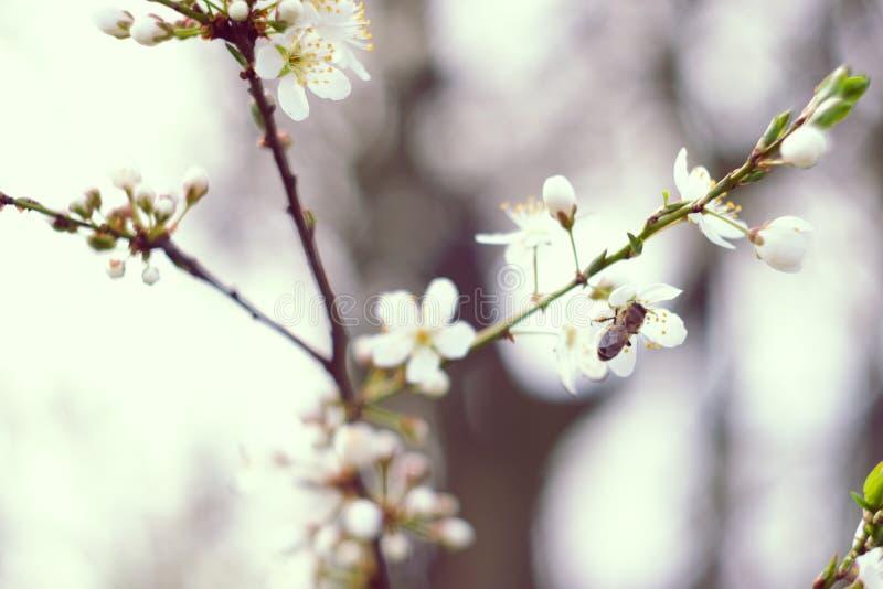 春天 库存图片