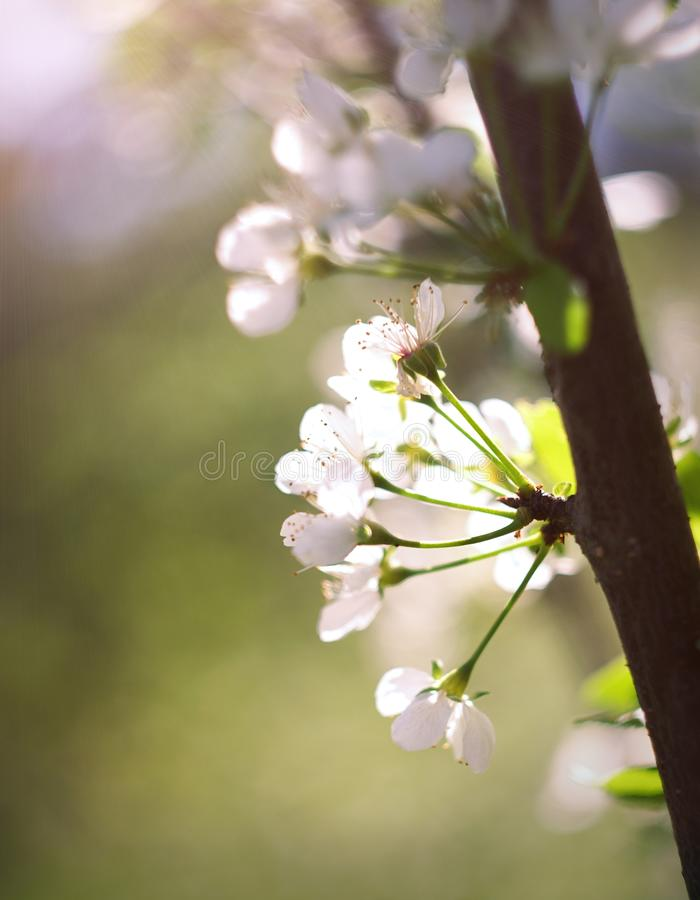 春天 图库摄影
