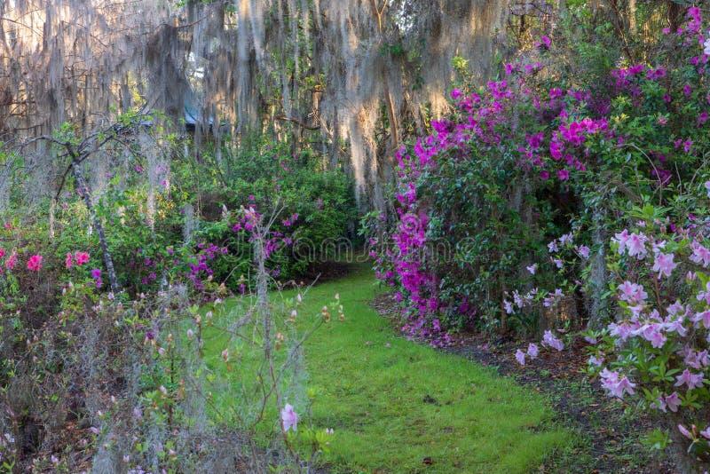 春天SC的南部的庭院 免版税库存图片
