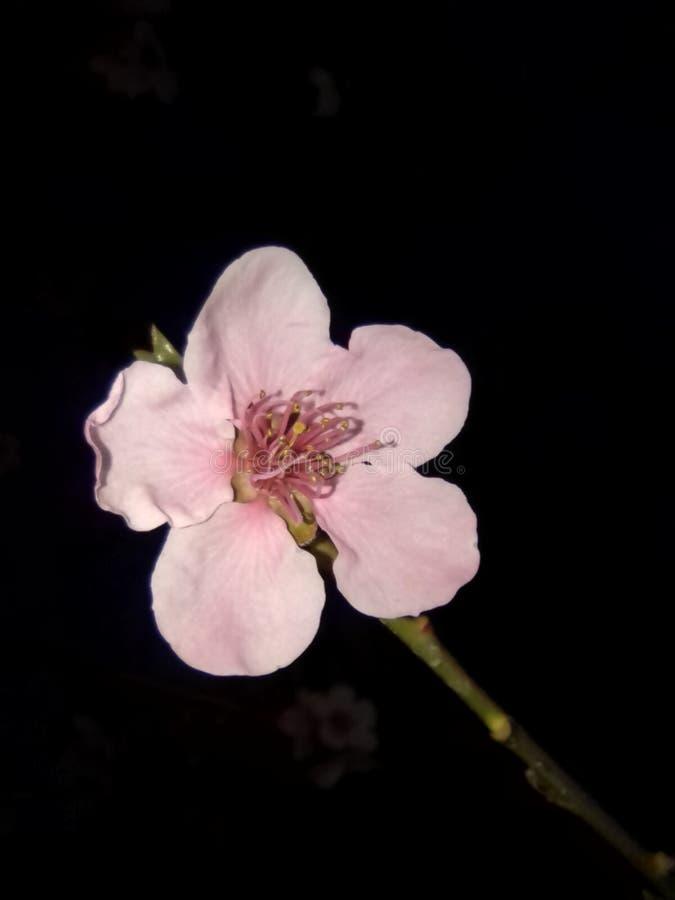 春季在克什米尔 免版税图库摄影