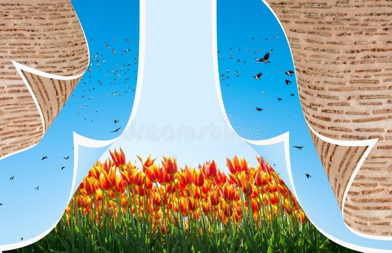春季的新鲜的开花的五颜六色的郁金香 免版税库存照片
