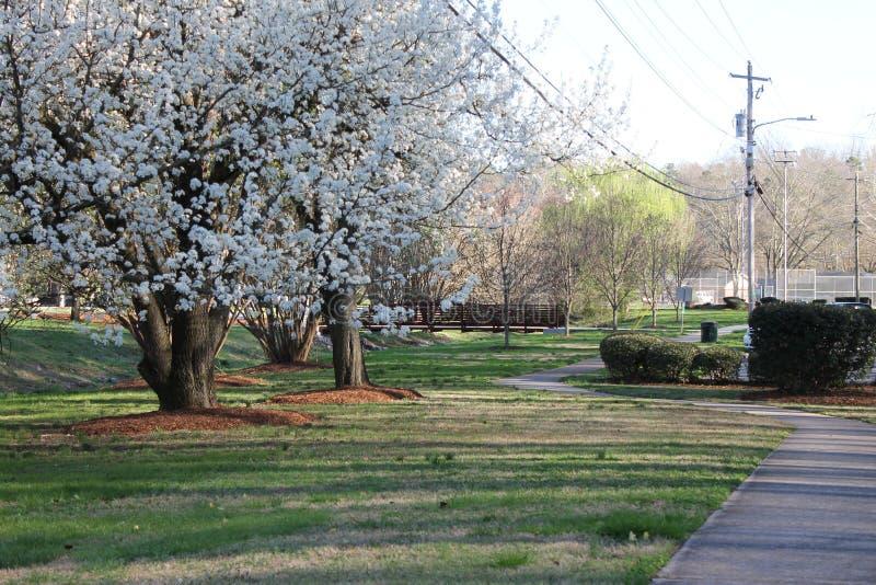 春季美丽的树和边路在公园 免版税库存图片
