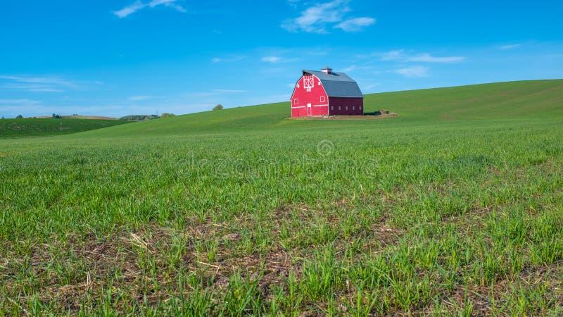 春小麦领域绿色和红色谷仓在华盛顿东部 库存图片