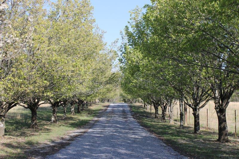 春日、偏僻的路和树 库存照片