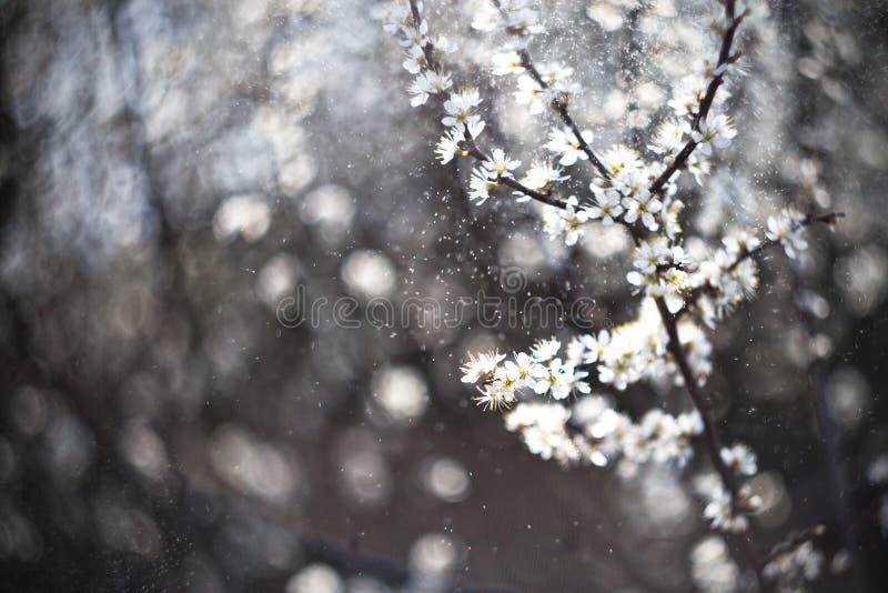 春雨 免版税库存图片