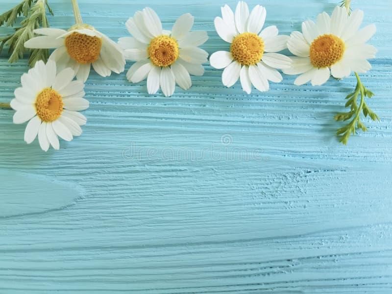 春黄菊在蓝色背景季节花束的花边界 库存图片