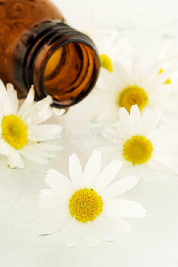 春黄菊按摩油 图库摄影